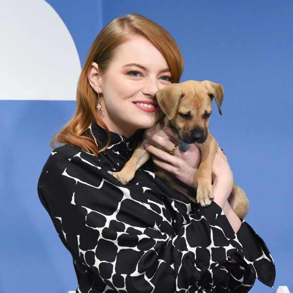 Emma Stone, dog, The Late Show